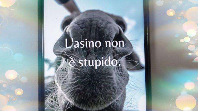L'asino non è stupido